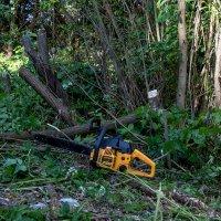 Говорят, что если в пилу залить бензин то можно спилить гораздо больше деревьев ! :: Анатолий. Chesnavik.