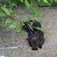 Чёрная пантера... :: Андрей Хлопонин