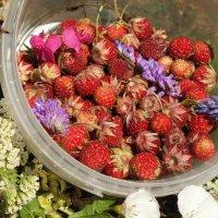 И на Варнаву-земляничника спешим за ягодой в поля! :: Андрей Заломленков
