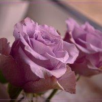 Просто роза :: Василиса Никитина
