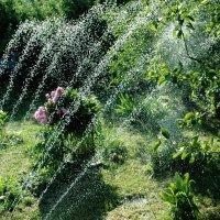 Жарко в саду... :: ГЕНРИХ
