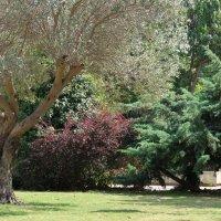 В парке... :: Надя Кушнир