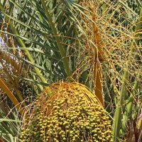 Пальмовые будни :: Надя Кушнир
