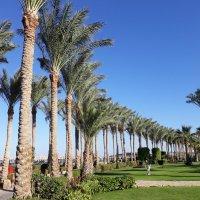 Море,пальмы и песок...Шарм аль-Шейх-2021г. :: Жанна Викторовна