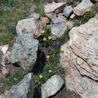 Спрятались среди камней от ветра :: Galina Solovova