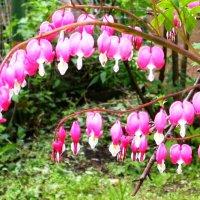 Цветы в саду. Разбитое сердце :: ГЕНРИХ
