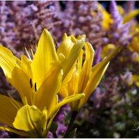 В июльском саду. :: Лариса С.