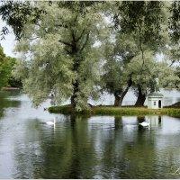 На озере. :: Лариса С.