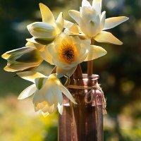 Водяные лилии :: Оксана Лада
