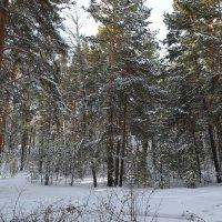 тишина февраля... :: Андрей Хлопонин