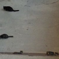 Кормление бездомных кошек :: Татьяна Р