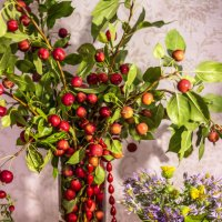 Лесные яблоки :: TATYANA PODYMA
