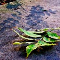 Опадают  листья... :: Евгений