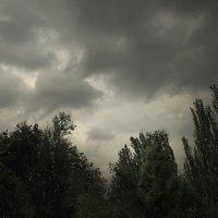 Непогода..! :: barsuk lesnoi