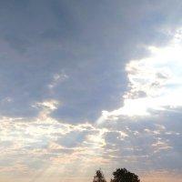 Утро :: Евгения
