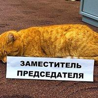 Впереди день голосования.  Надо подготовиться. :: Михаил Столяров