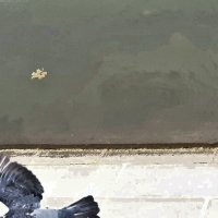 Над водой :: Tanja Gerster