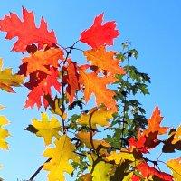 Осенние листья . :: ГЕНРИХ
