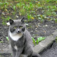 Гроза мышей :: Наталия П