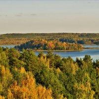 Осень на озере Сапшо. Смоленская обл. :: Ольга Митрофанова