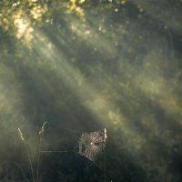Луч света в арахнидовом царстве :: Валентина Кобзева