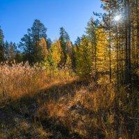 Осенний лес :: Vladimbormotov