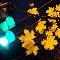 Зеленый свет для осени :: Людмила Alex