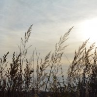 осенние травы... :: Галина R...