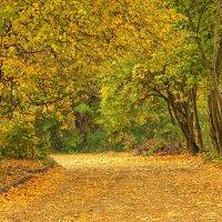 Дорога в осень :: Владимир