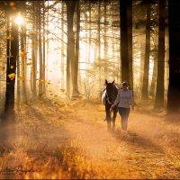 Утро в осеннем лесу... :: Виктор Перякин