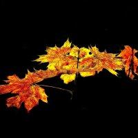 Золотая осень :: Леонид leo
