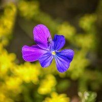 Цветы :: Владимир Колесников