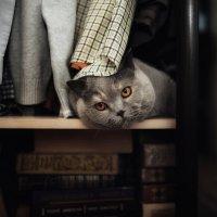 Жил был в шкафу  большой умный голова ..) :: Лилия .