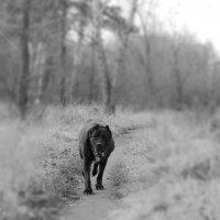 собака :: Виктория Маслова