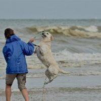 радостная собака :: MVMarina