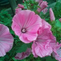 Красота в саду :: Алёна Ануфриева