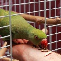 Птичка :: Анна Тимофеева