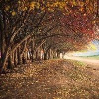 Осенний боярышник. :: Юрий