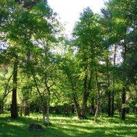Летом в горах :: Светлана Попова