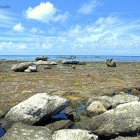 Дикий пляж около Гаваны :: Arman S