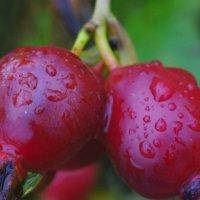 Плоды осени :: Павел Гусев