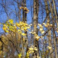Осень :: Yuriy F
