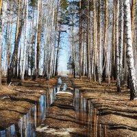 Весенняя дорога в лесу :: Геннадий Ячменев