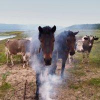 Обкуренный конь :: Сергей Шаврин