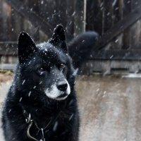 my dog :: Ekaterina Varishcheva