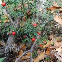 Неизвестные ягоды :: Любовь Пашина