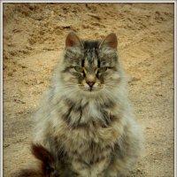 Кошечка :: Павел Галактионов