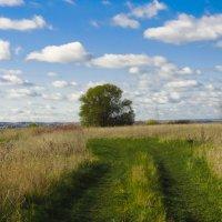 Дорога в поле :: Юрий Бичеров