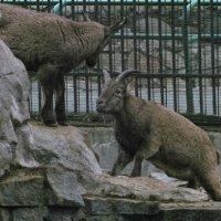 zoo :: Юрий Ефимов