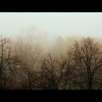 Туман в городе :: Алина Адаменко